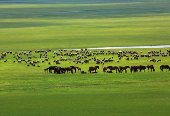 【大型活动·徒个中国】06月20日-06月26日 徒个中国·内蒙古丨呼伦贝尔大草原50公里徒步 7日行