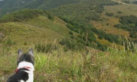 温州峡谷驴友发现尸骨 身份确认为失踪四月的八旬老人