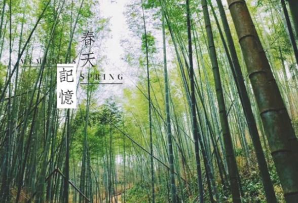 【徒步星溪】从化星溪徒步吃鸡 赏夏日竹海 第8期 6月30日