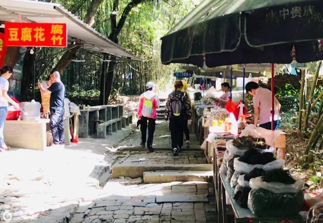五五户外【小漓江】龙门香溪河美食徒步 竹林老树古村落