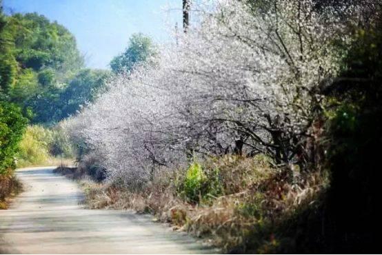 2019年1月13日,走进革命老区,寻访红色记忆暨惠州首届梅花节徒步活动