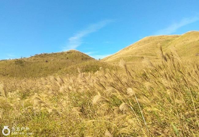 五五户外【高山草甸】大南山扫黄 看漫山芦苇荡