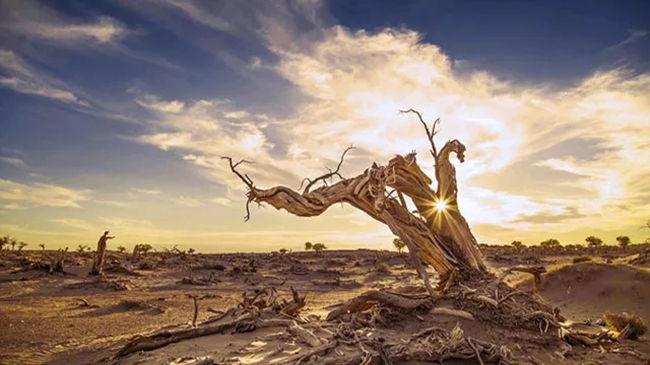 【金秋额济纳6日·高铁A线】弱水金沙湾-黑城怪树林-沙漠日落-居延海-金塔胡杨林6日游【五五户外】