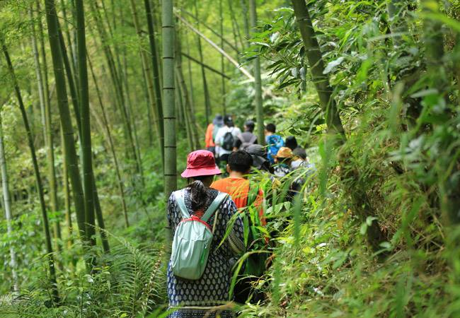 五五户外从化星溪徒步穿越 漫步竹海